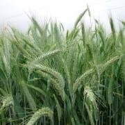 Czas na nawożenie fosforowo - potasowe