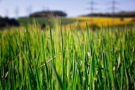 Środki ochrony roślin