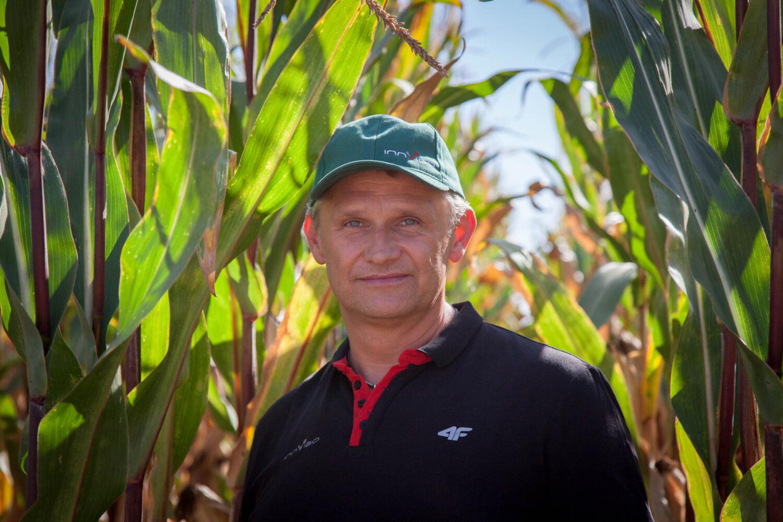 <alt> odchwaszczanie kukurydzy